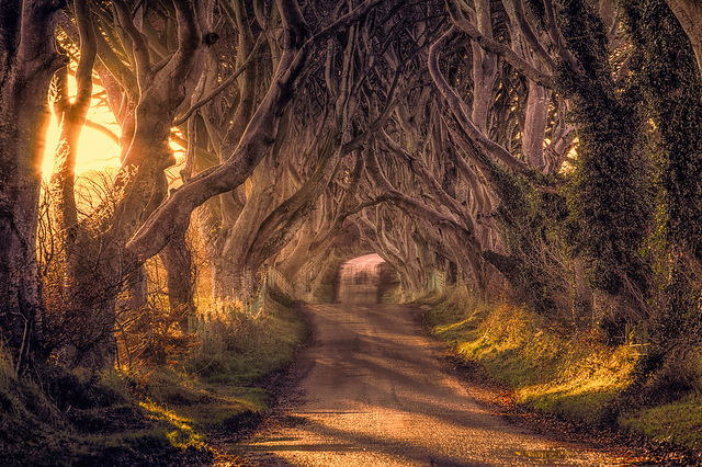 The Dark Hedges, Ballymoney Ireland